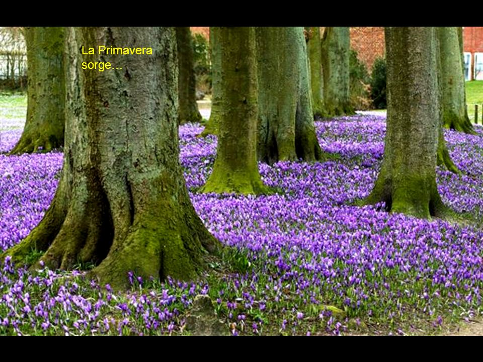 La Primavera sorge…