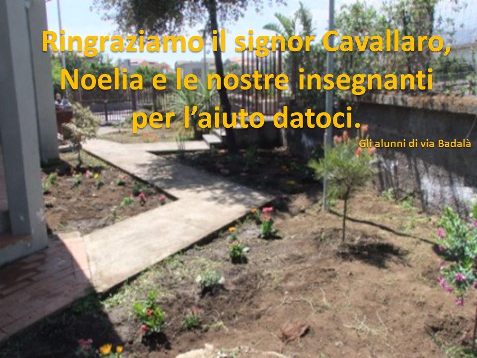 Ringraziamo il signor Cavallaro, Noelia e le nostre insegnanti per l'aiuto datoci.