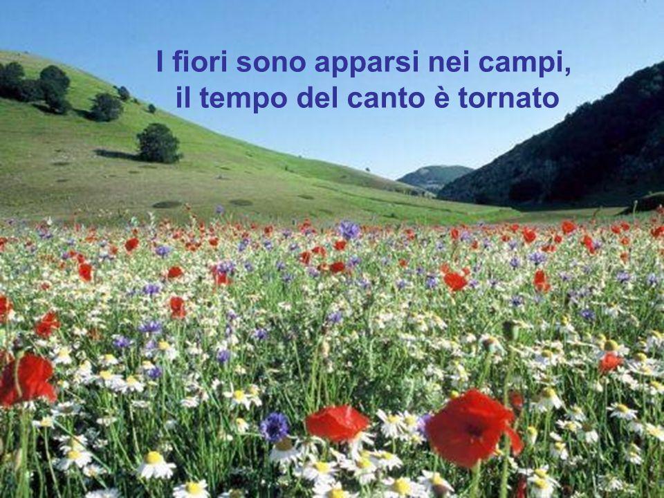 I fiori sono apparsi nei campi, il tempo del canto è tornato