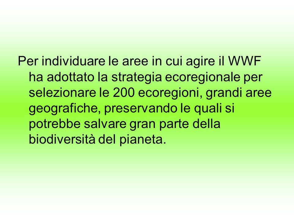 Per individuare le aree in cui agire il WWF ha adottato la strategia ecoregionale per selezionare le 200 ecoregioni, grandi aree geografiche, preservando le quali si potrebbe salvare gran parte della biodiversità del pianeta.
