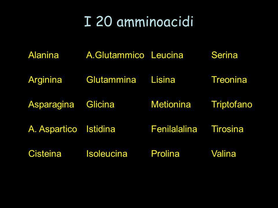 I 20 amminoacidi Alanina A.Glutammico Leucina Serina Arginina