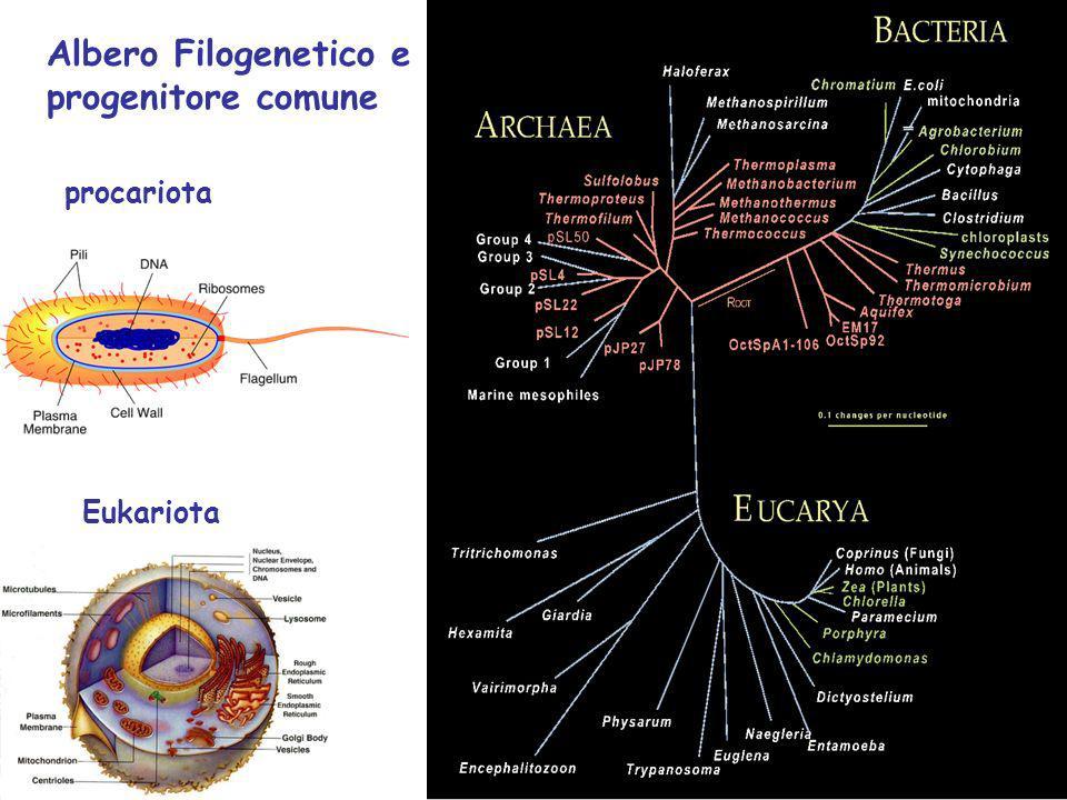 Albero Filogenetico e progenitore comune