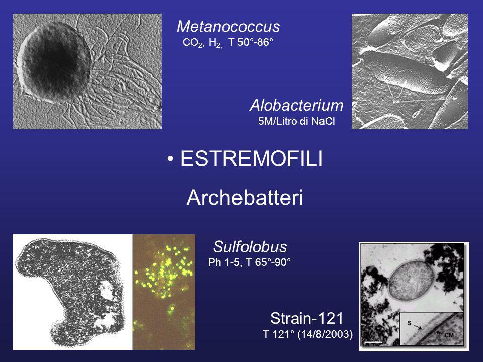 ESTREMOFILI Archebatteri Metanococcus Alobacterium Sulfolobus