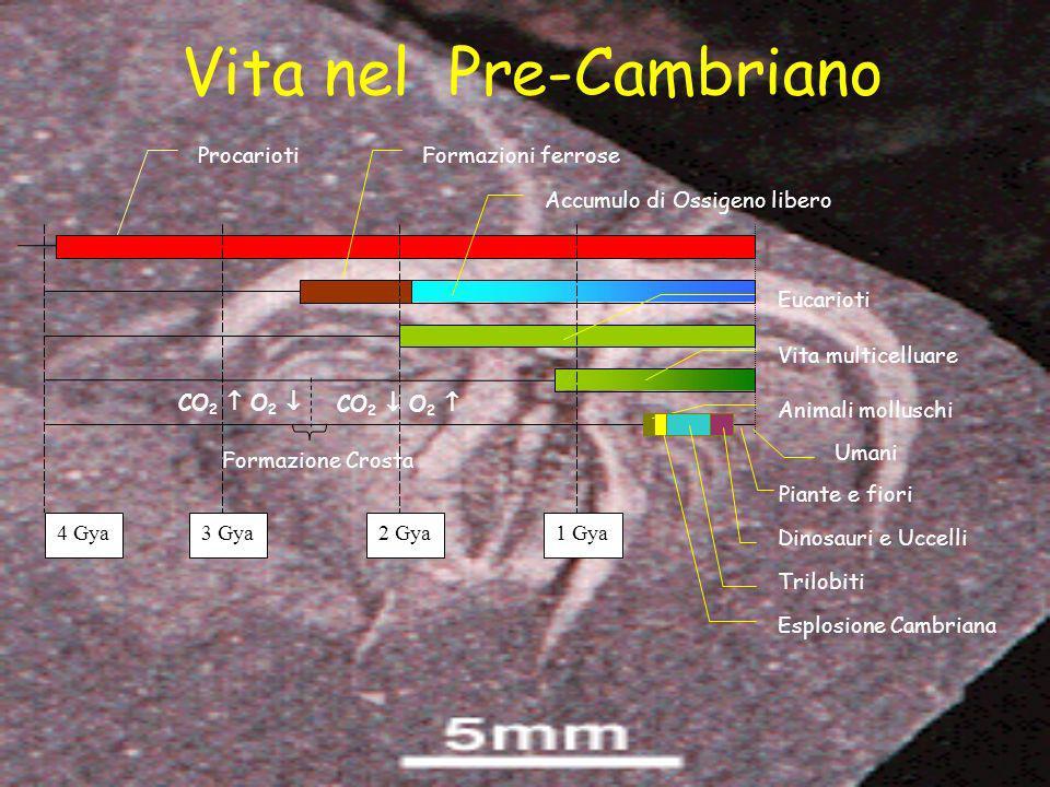 Vita nel Pre-Cambriano