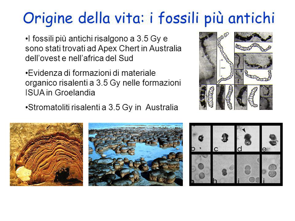 Origine della vita: i fossili più antichi