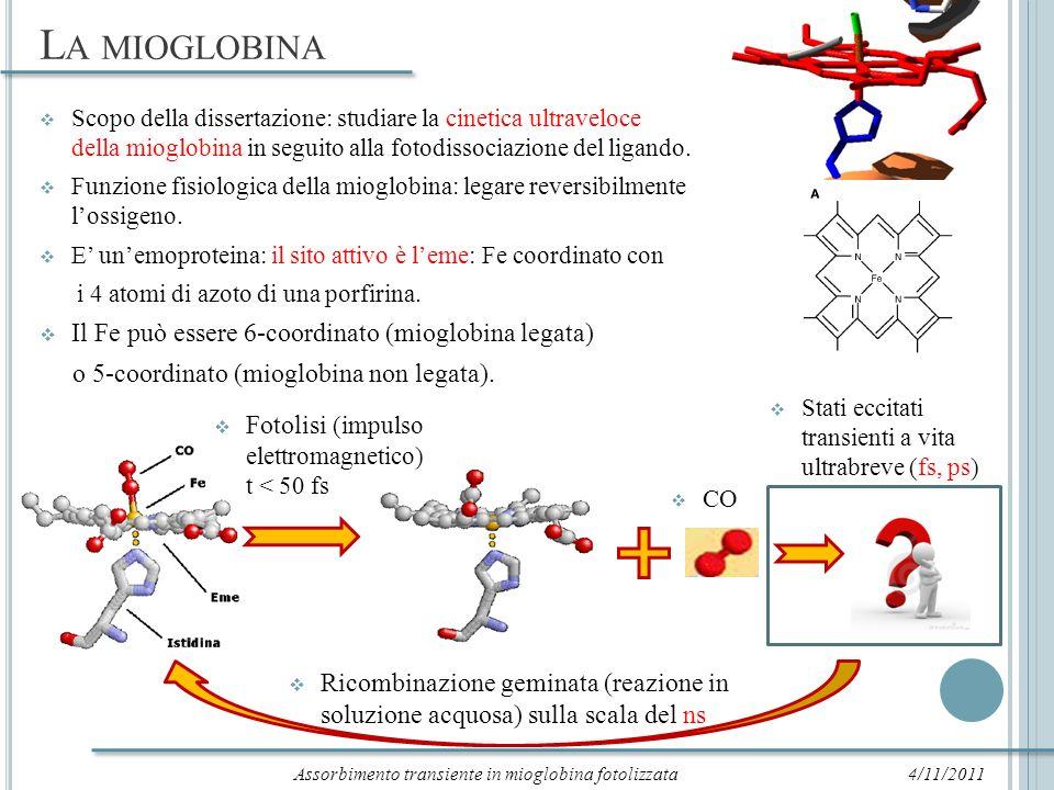 Assorbimento transiente in mioglobina fotolizzata