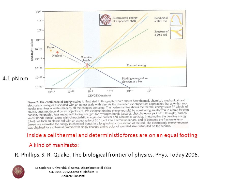 Inside a cell thermal and deterministic forces are on an equal footing