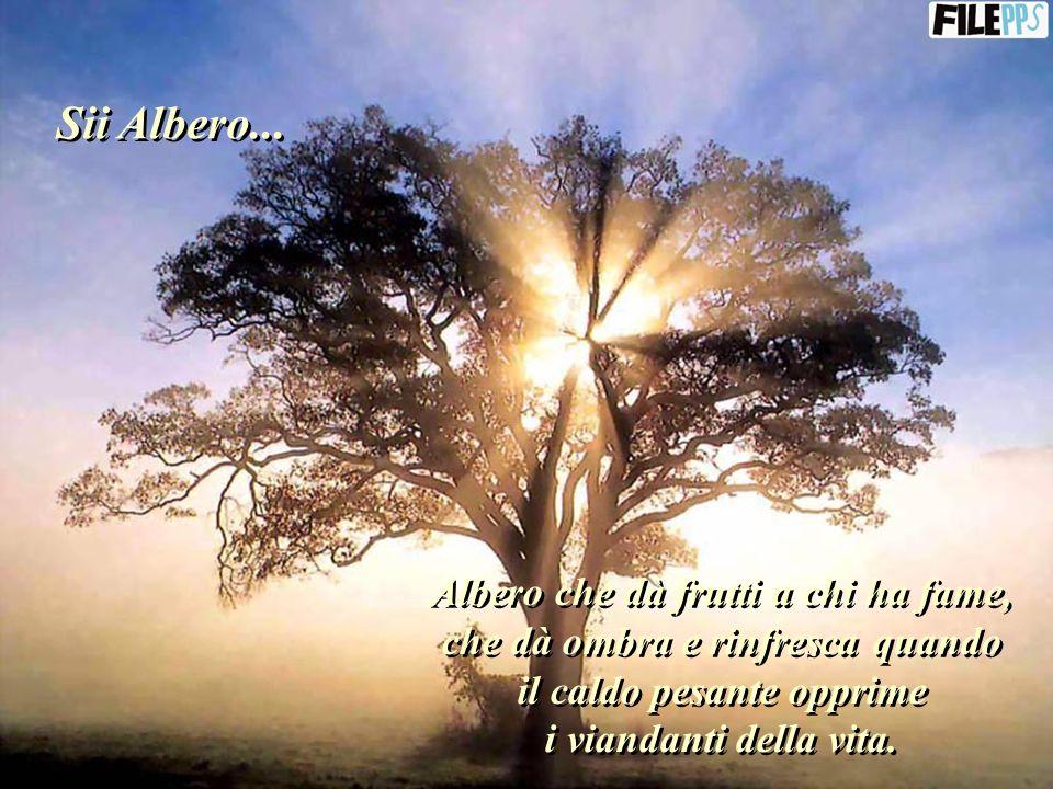 Sii Albero...