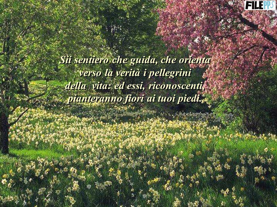 Sii sentiero che guida, che orienta verso la verità i pellegrini della vita: ed essi, riconoscenti, pianteranno fiori ai tuoi piedi.