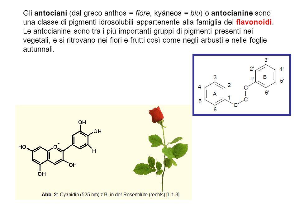 Gli antociani (dal greco anthos = fiore, kyáneos = blu) o antocianine sono una classe di pigmenti idrosolubili appartenente alla famiglia dei flavonoidi. Le antocianine sono tra i più importanti gruppi di pigmenti presenti nei vegetali, e si ritrovano nei fiori e frutti così come negli arbusti e nelle foglie autunnali.