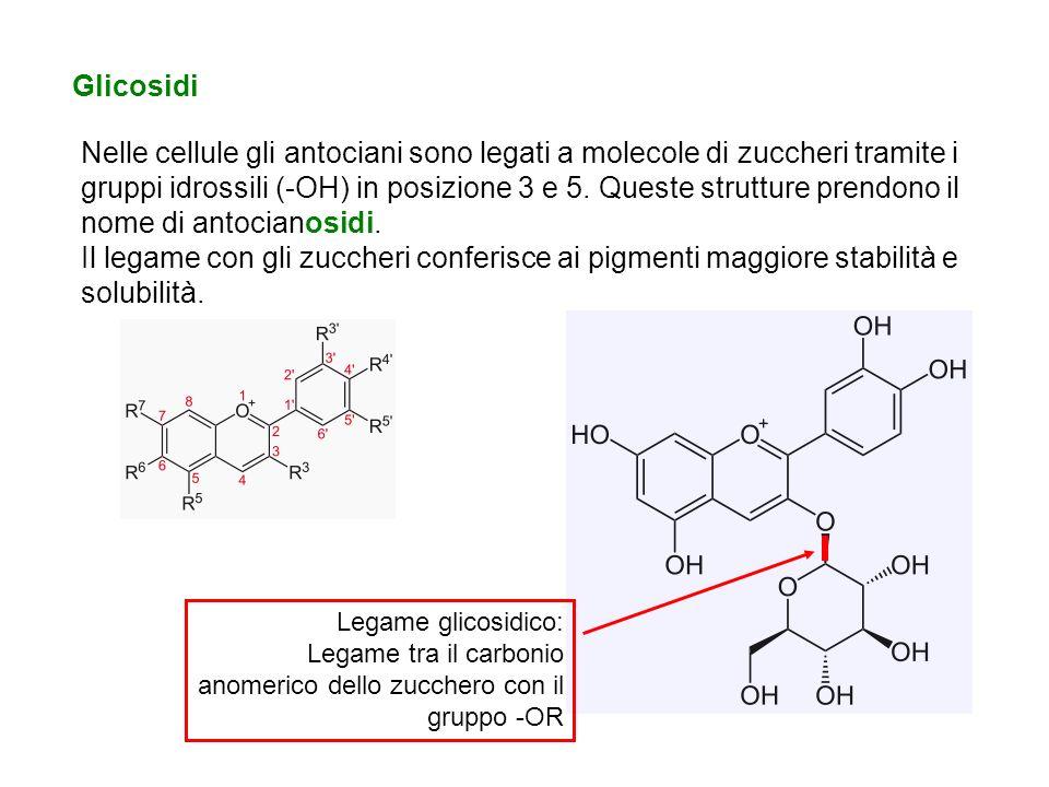 Glicosidi