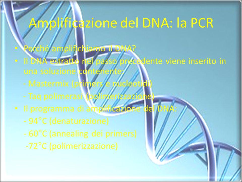 Amplificazione del DNA: la PCR