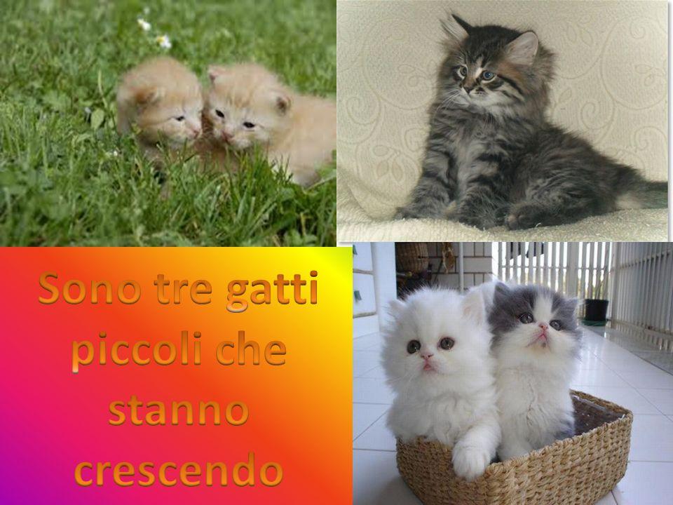 Sono tre gatti piccoli che stanno crescendo