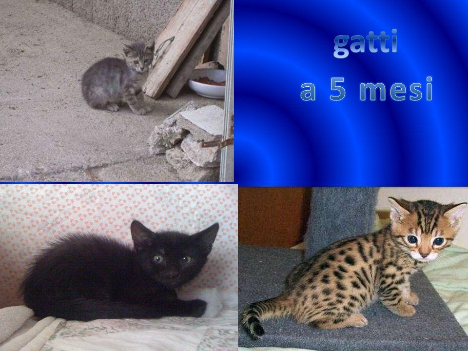 gatti a 5 mesi