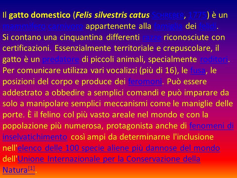 Il gatto domestico (Felis silvestris catus Schreber, 1775) è un mammifero carnivoro appartenente alla famiglia dei felidi.