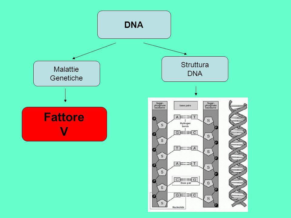 DNA Struttura DNA Malattie Genetiche Fattore V