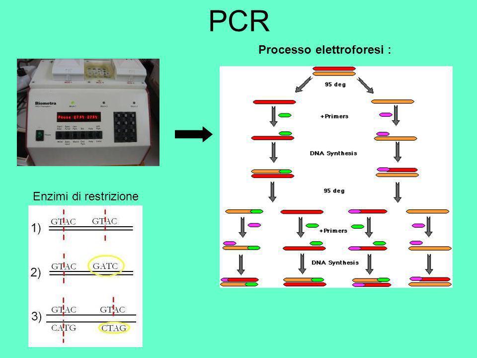 PCR Processo elettroforesi : Enzimi di restrizione