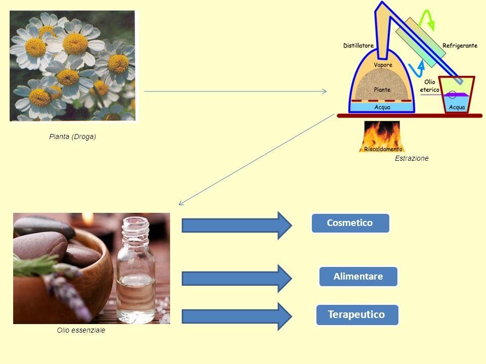 Pianta (Droga) Estrazione Olio essenziale Cosmetico Alimentare