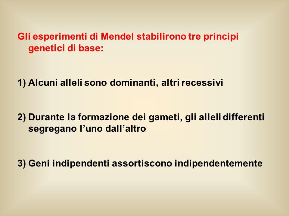 Gli esperimenti di Mendel stabilirono tre principi genetici di base: