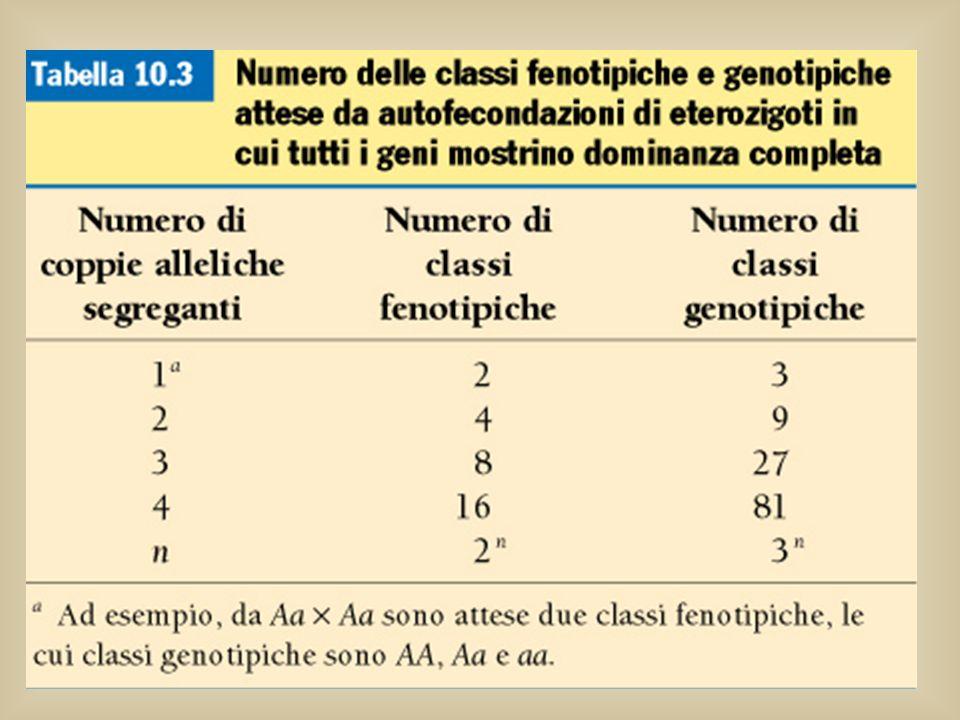 Alla F2 ci sono 2n classi fenotipiche, dove n è il numero di coppie alleliche in eterozigosi che si distribuiscono in modo indipendente