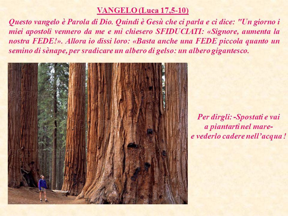 VANGELO (Luca 17,5-10)