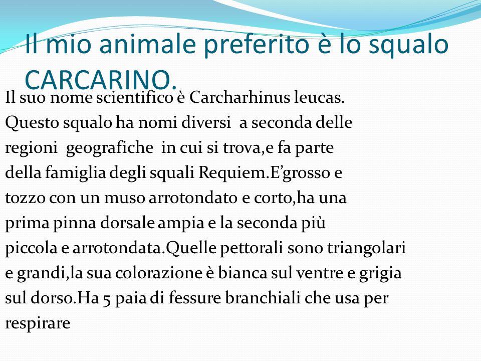 Il mio animale preferito è lo squalo CARCARINO.