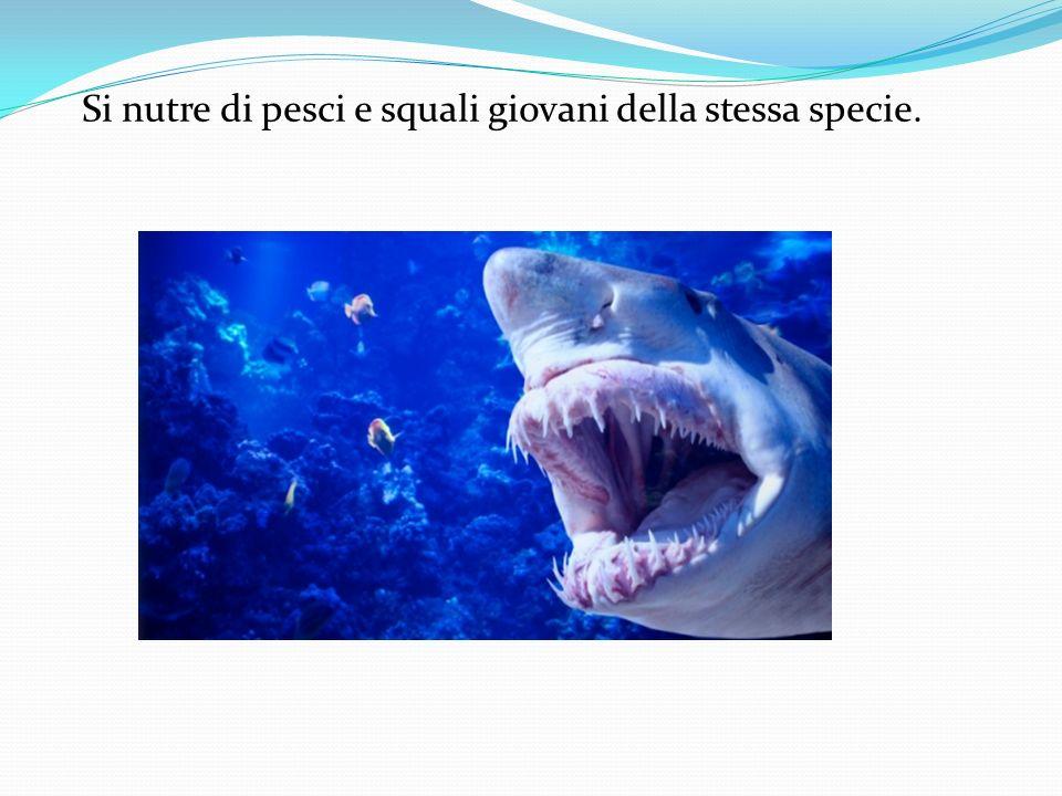 Si nutre di pesci e squali giovani della stessa specie.