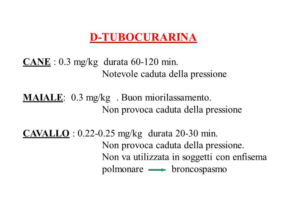 D-TUBOCURARINA CANE : 0.3 mg/kg durata 60-120 min. Notevole caduta della pressione. MAIALE: 0.3 mg/kg . Buon miorilassamento.