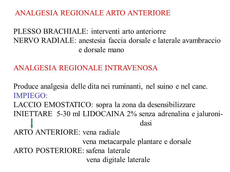 ANALGESIA REGIONALE ARTO ANTERIORE