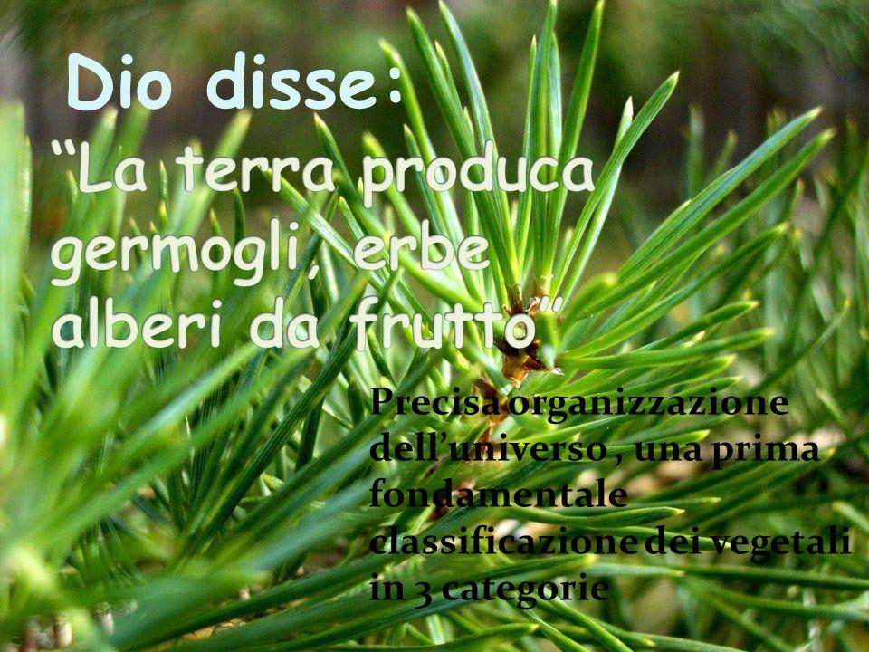 La terra produca germogli, erbe alberi da frutto