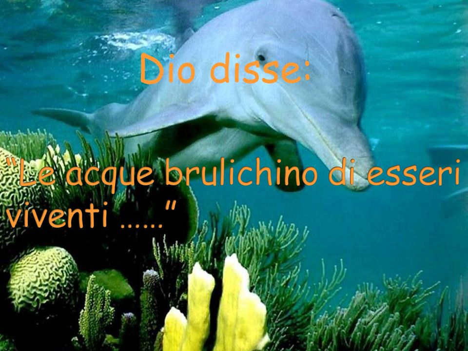 Le acque brulichino di esseri viventi ……