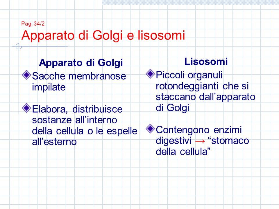 Pag. 34/2 Apparato di Golgi e lisosomi
