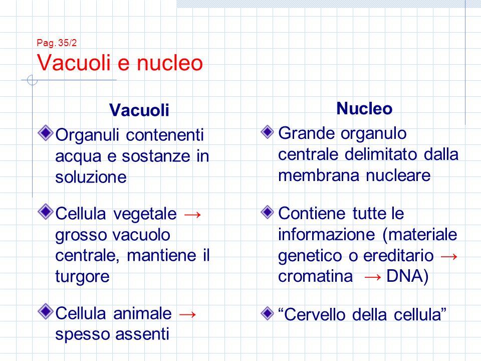 Organuli contenenti acqua e sostanze in soluzione