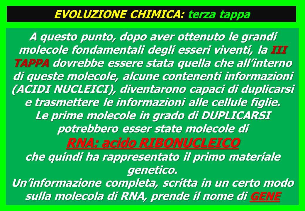 EVOLUZIONE CHIMICA: terza tappa