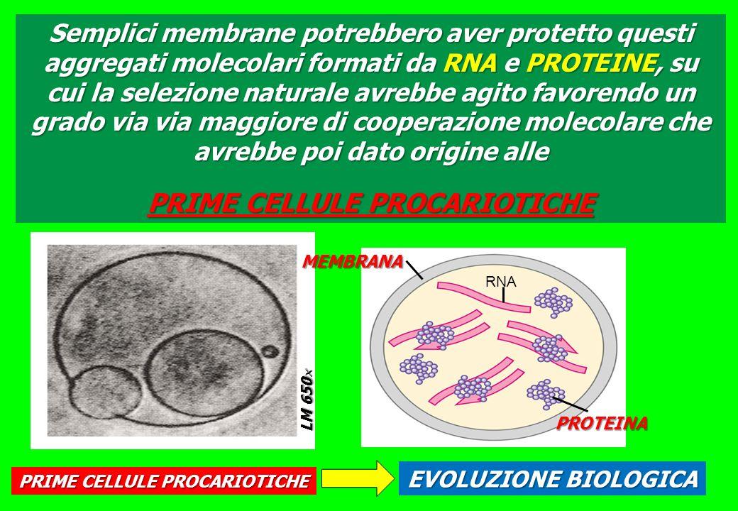 PRIME CELLULE PROCARIOTICHE PRIME CELLULE PROCARIOTICHE