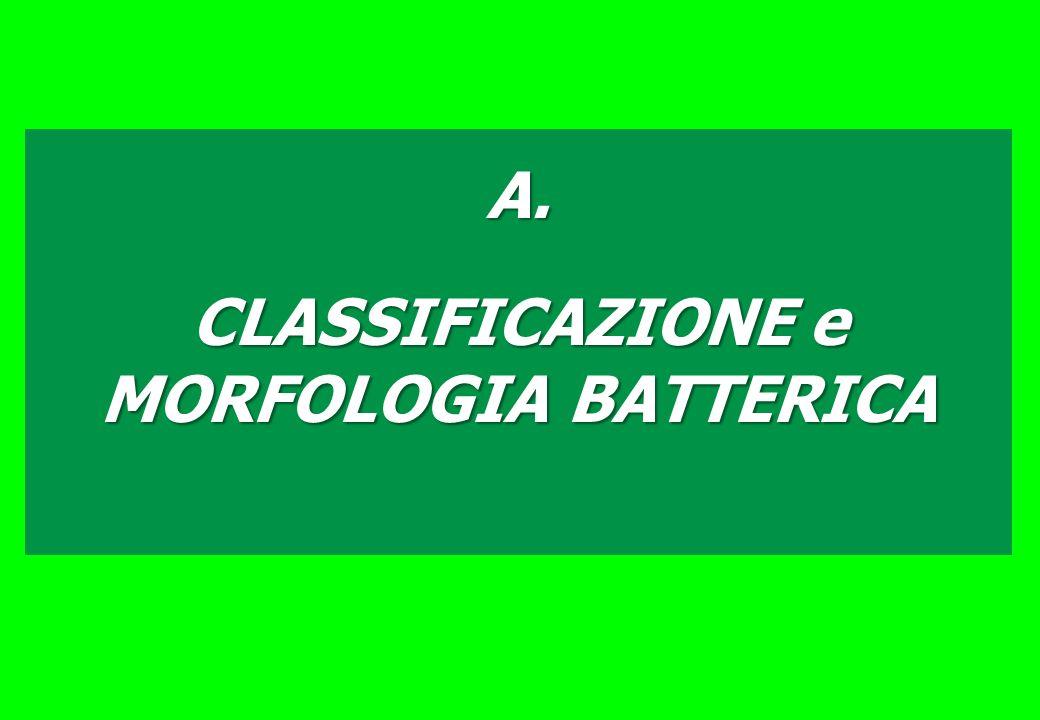 CLASSIFICAZIONE e MORFOLOGIA BATTERICA