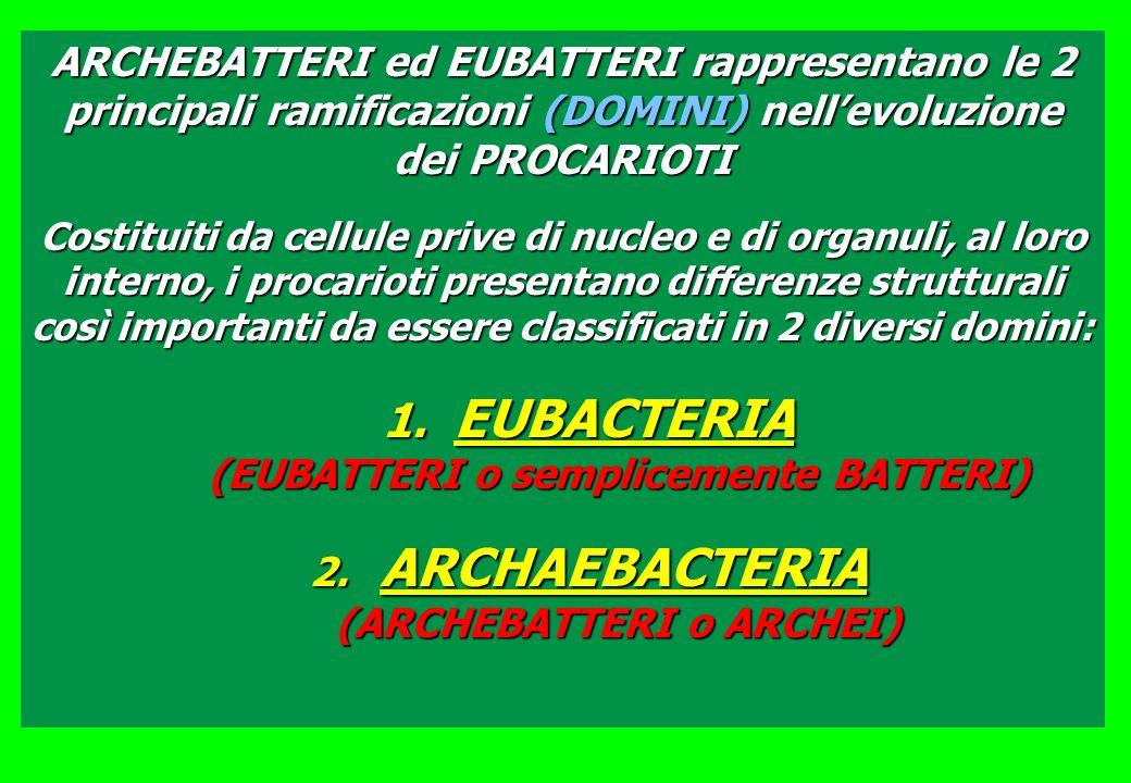EUBACTERIA (EUBATTERI o semplicemente BATTERI)