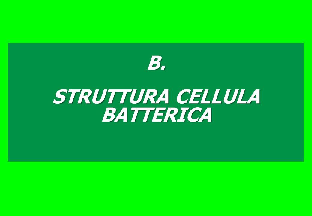 STRUTTURA CELLULA BATTERICA