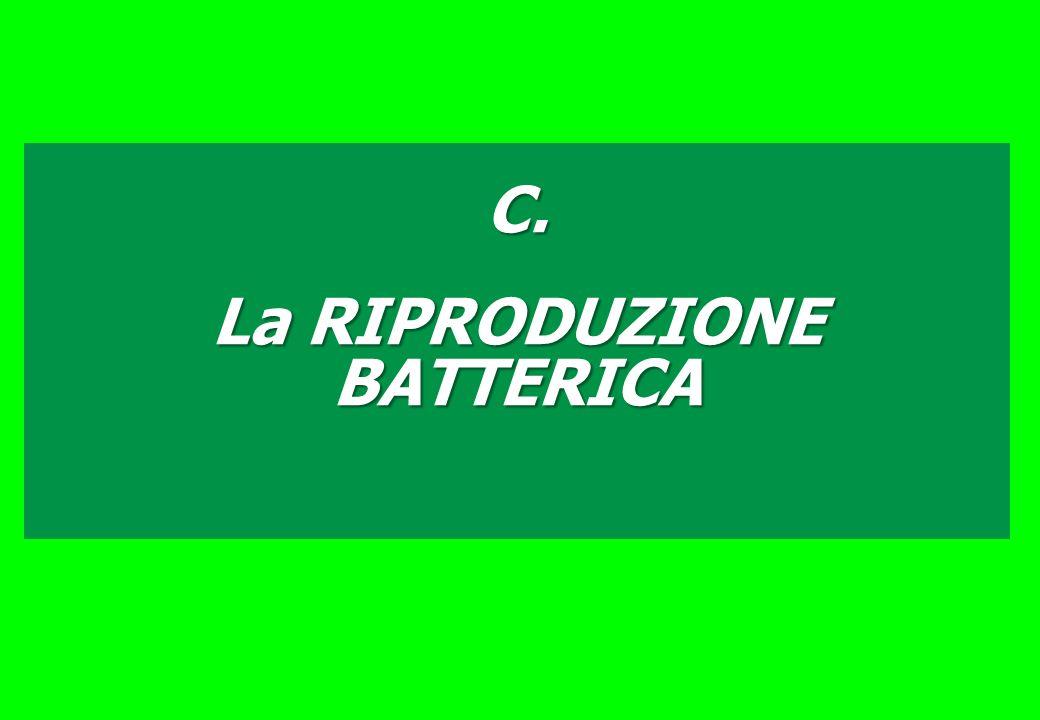La RIPRODUZIONE BATTERICA