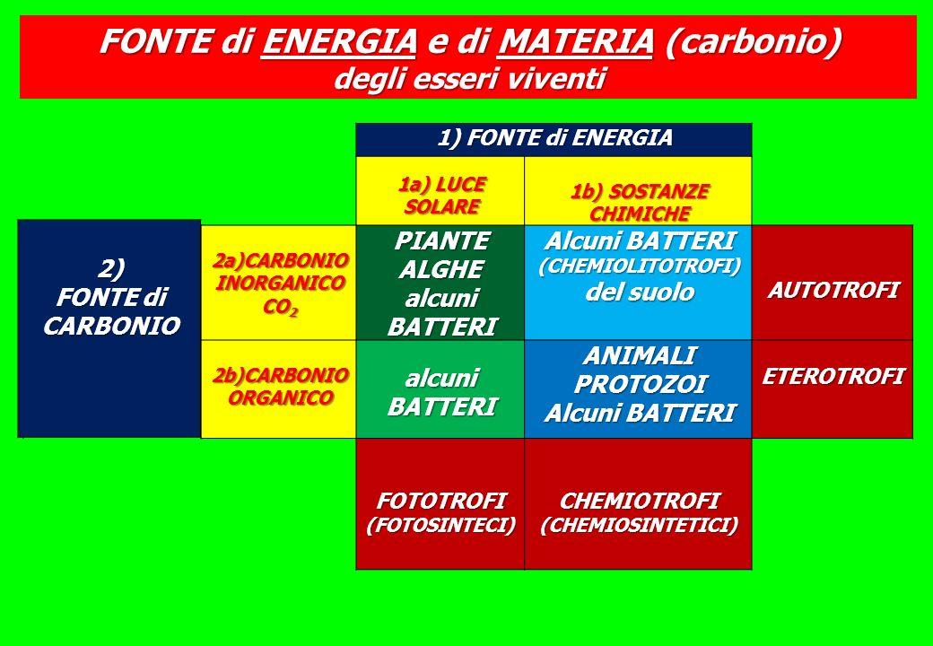 FONTE di ENERGIA e di MATERIA (carbonio)