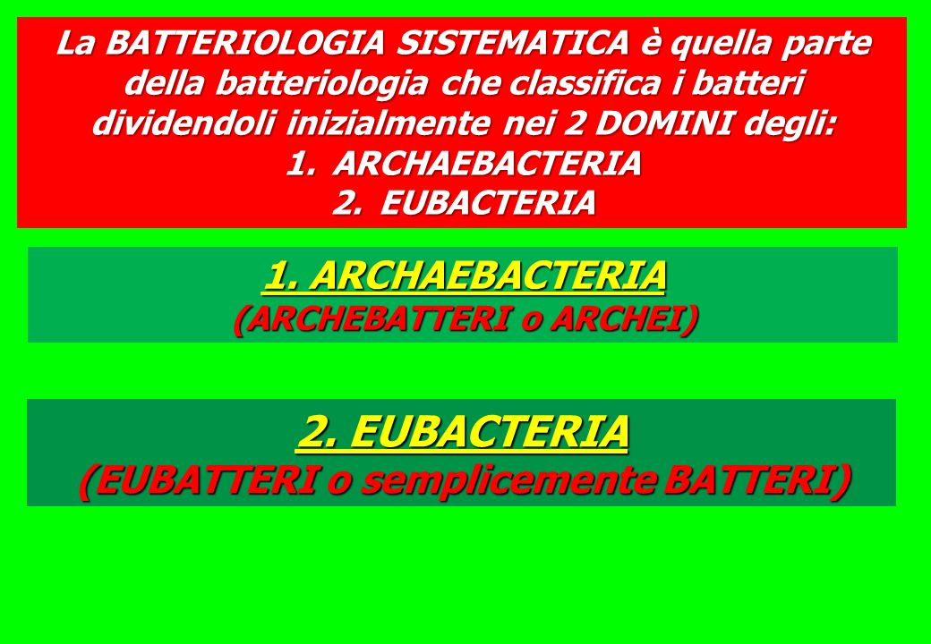 2. EUBACTERIA (EUBATTERI o semplicemente BATTERI)