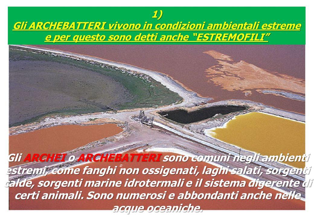 1) Gli ARCHEBATTERI vivono in condizioni ambientali estreme e per questo sono detti anche ESTREMOFILI