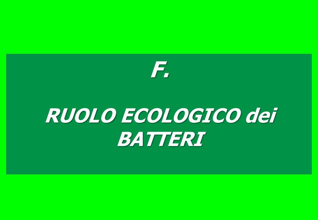 RUOLO ECOLOGICO dei BATTERI