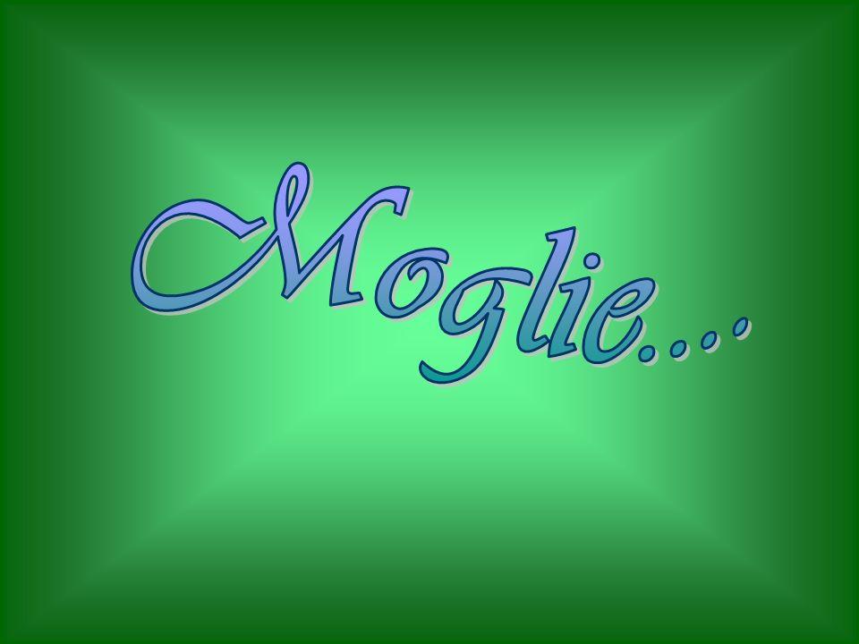 Moglie....
