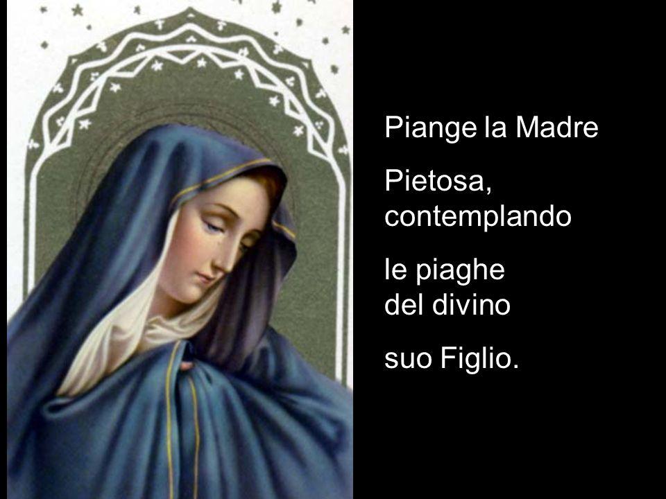 Piange la Madre Pietosa, contemplando. le piaghe del divino.