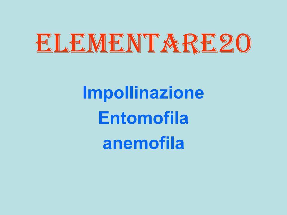 Impollinazione Entomofila anemofila