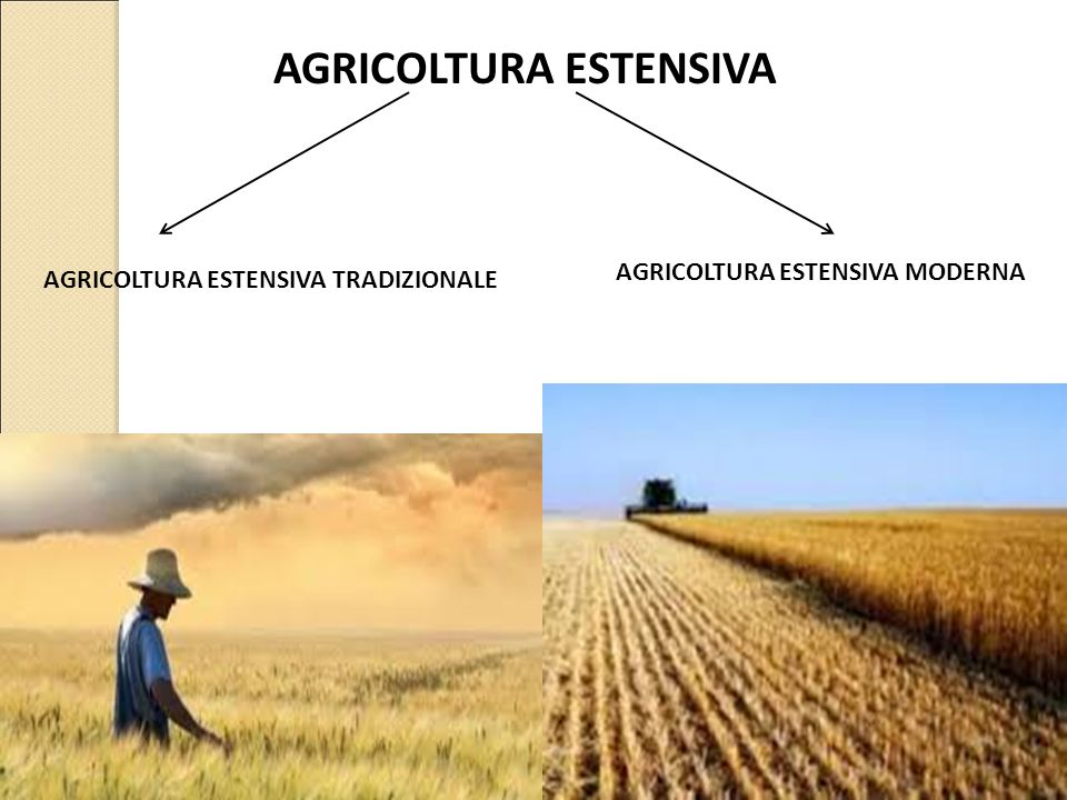 AGRICOLTURA ESTENSIVA