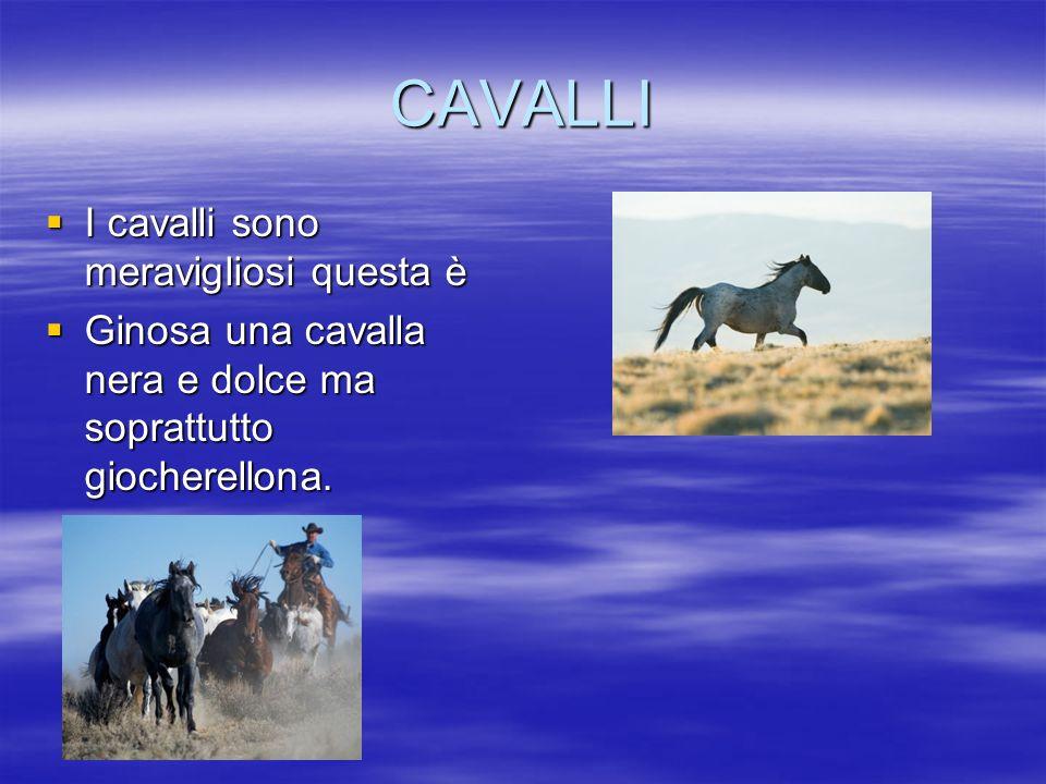 CAVALLI I cavalli sono meravigliosi questa è