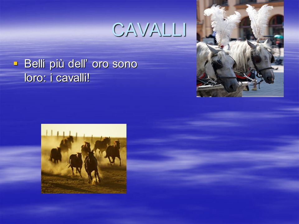 CAVALLI Belli più dell' oro sono loro: i cavalli!