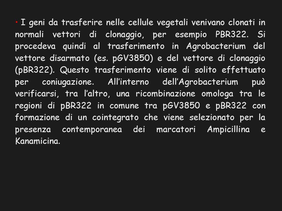I geni da trasferire nelle cellule vegetali venivano clonati in normali vettori di clonaggio, per esempio PBR322.